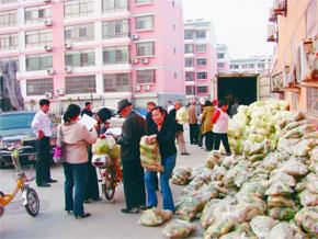 绿色蔬菜回报社会